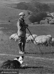 West Dean, Shepherd And Sheep Dog 1922