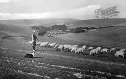 West Dean, Shepherd With His Flock 1922