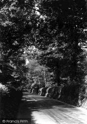 Westbury, A Leafy Lane c.1955