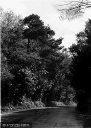 Westbury, A Pleasant Lane c.1955