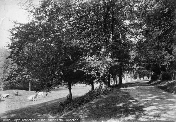 Photo of Westcott, Tillingbourne 1906
