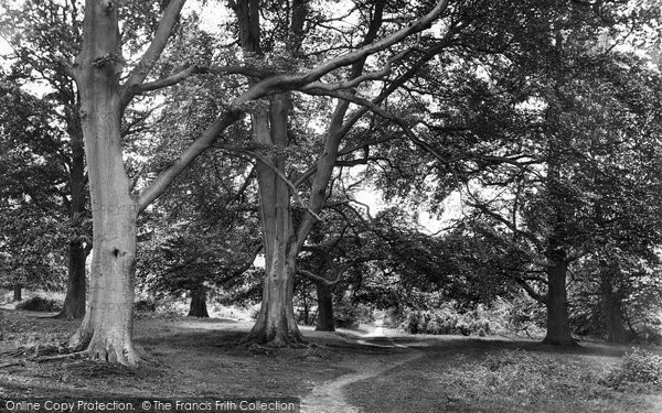 Photo of Westerham, Squerrys Wood 1925