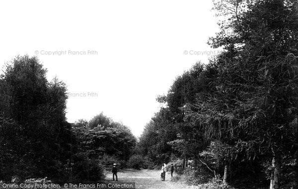 Photo of Weston Super Mare, In The Woods 1887