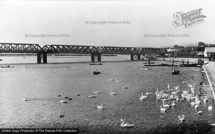 Photo of Weymouth, Radipole Lake, The Swans c.1955