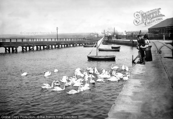 Photo of Weymouth, The Swannery 1890
