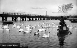 Weymouth, The Swannery 1890