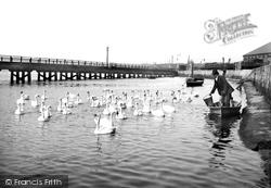 The Swannery, Radipole Lake 1890, Weymouth