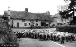 Market Day c.1950, Wheddon Cross
