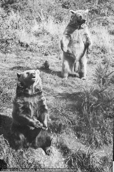 Photo of Whipsnade, Zoo, Brown Bears c.1960