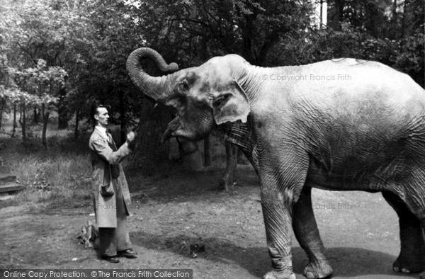 Photo of Whipsnade, Zoo, Elephant And Keeper c.1955