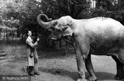 Whipsnade, Zoo, Elephant And Keeper c.1955