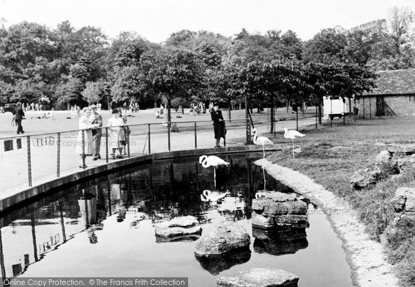 Photo of Whipsnade, Zoo, Flamingo Island c.1960
