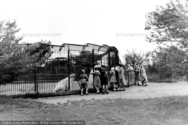 Photo of Whipsnade, Zoo, Polar Bears c.1960