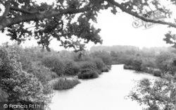 White Colne, The Lake c.1955