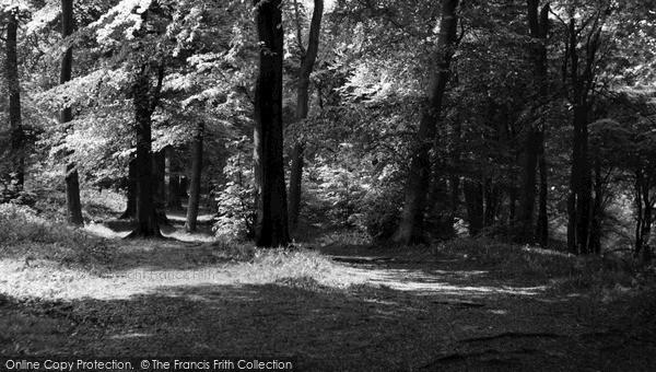 Photo of Whiteleaf, The Beech Woods c.1960