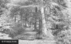 The Woods c.1960, Whiteleaf