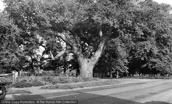 Photo of Wilburton, The Oak Tree c.1955