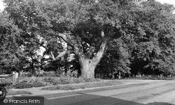 The Oak Tree c.1955, Wilburton