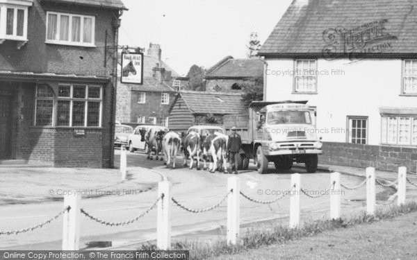 Photo of Willaston, Cows In The Road c.1965