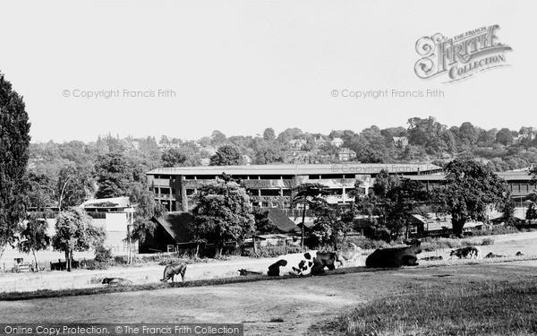 Wimbledon, The Centre Court, The Park 1950