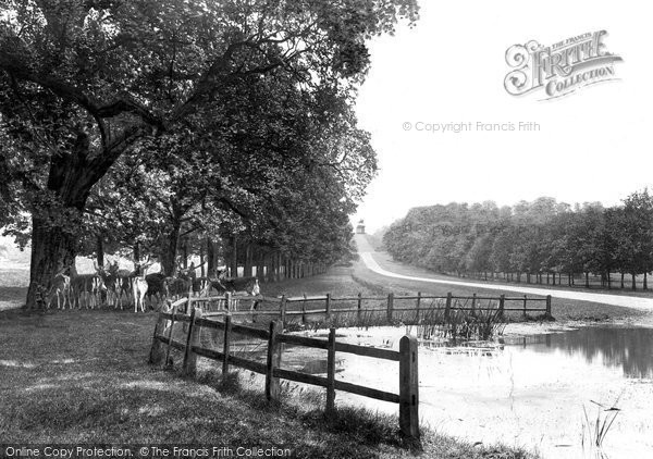 Photo of Windsor, Great Park, Long Walk 1914