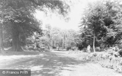 Windsor, Great Park, Savill Gardens c.1960