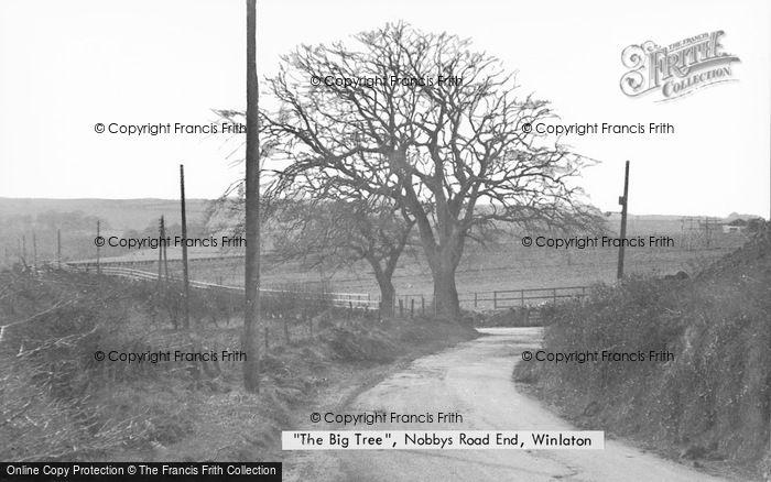 Photo of Winlaton, The Big Tree, Nobbys Road End c.1955