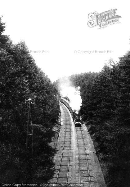 Photo of Witley, L & S W Express In The Pine Woods 1908