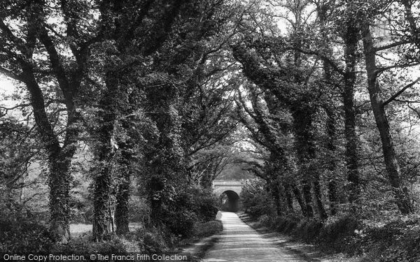 Photo of Witley, Lane Leading To Sweetwater 1927