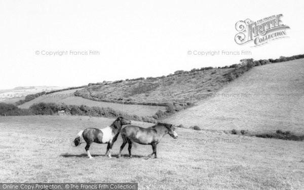 Photo of Wiveliscombe, Exmoor Ponies c.1967