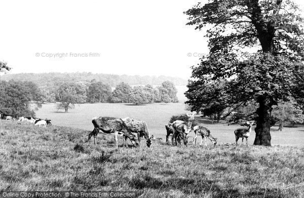 Photo of Woburn Abbey, The Park c.1960