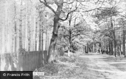 Woburn Sands, The Woods c.1950