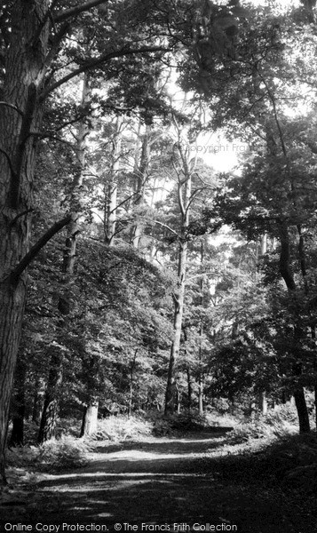 Photo of Woburn Sands, The Woods c.1955