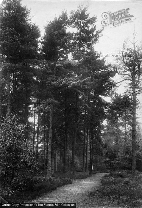 Photo of Wokingham, In The Pines, London Open Air Sanatorium, Pinewood 1910