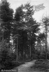In The Pines, London Open Air Sanatorium, Pinewood 1910, Wokingham