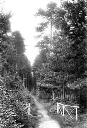 Wokingham, Pinewood Avenue, London Open Air Sanatorium 1910