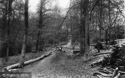 Wooburn, The Woods 1910