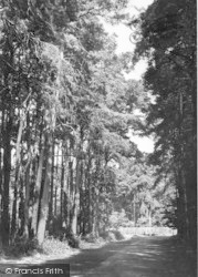 Woodhall Spa, The Woods c.1950