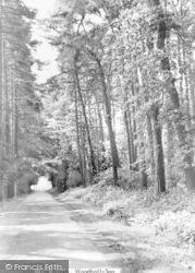 The Woods c.1950, Woodhall Spa