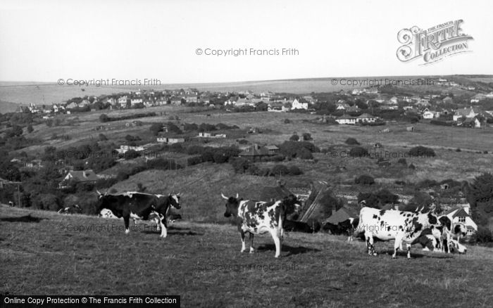 Photo of Woodingdean, Cows On The Downs c.1955