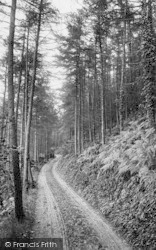 Woody Bay, In The Pines 1908