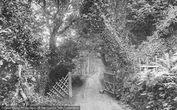 Photo of Woody Bay, In The Woods 1908