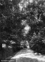 Merrist Wood Lane 1904, Worplesdon
