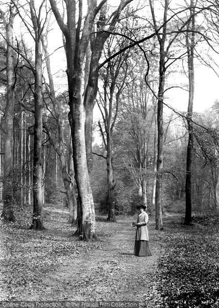Photo of Wotton, Deerleap Woods 1906