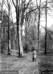 Wotton, Deerleap Woods 1906
