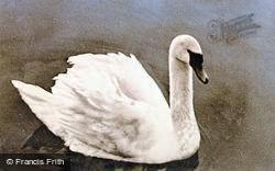 A Swan c.1950, Wroxham