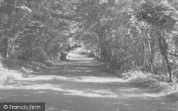 Yealand Conyers, Yealand Woods c.1955