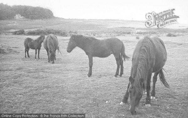 Photo of Yelverton, Dartmoor Ponies c.1955