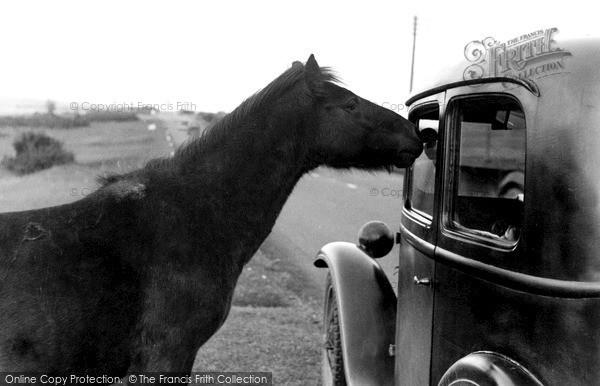 Photo of Yelverton, Dartmoor Pony c.1955
