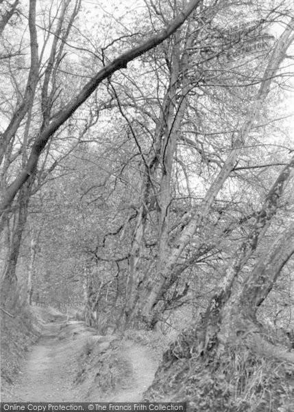 Photo of Yeovil, Pathway, Newtown Woods c.1955